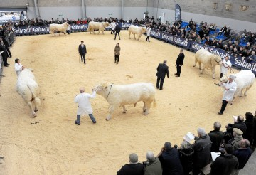 """""""Top bulls"""" line up for Stirling Bull Sales"""