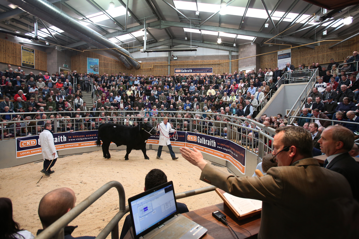 United Auctions hosting Stirling Bull Sales at Stirling Agricultural Centre
