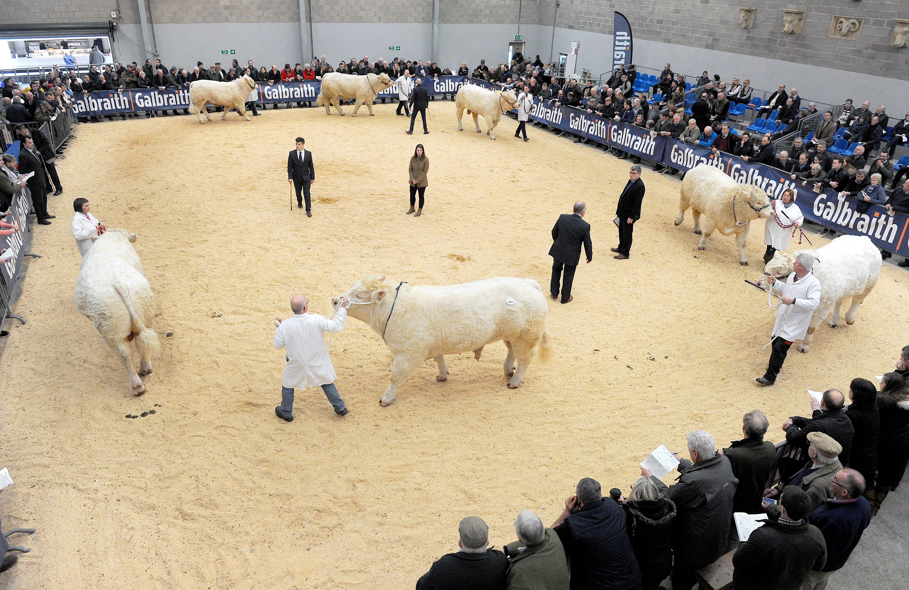 Bull Sales 19 02 18 - 25